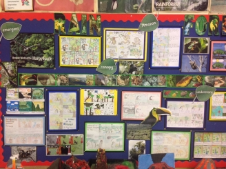 Rainforests Display Board