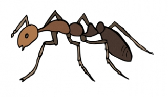 Ant Display Picture