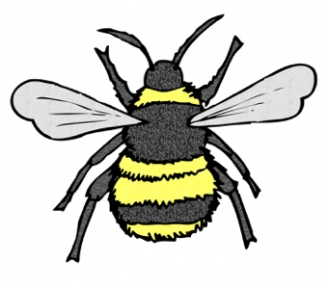 Bee Display Picture